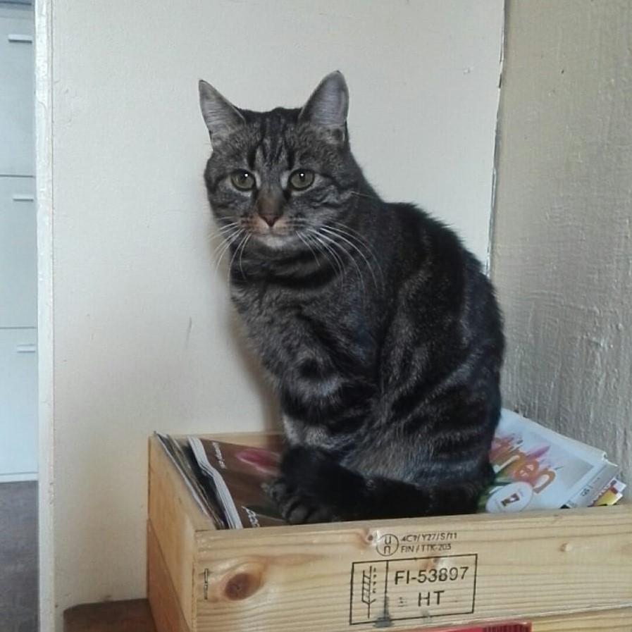Tassutiimi kotia etsivä kissa