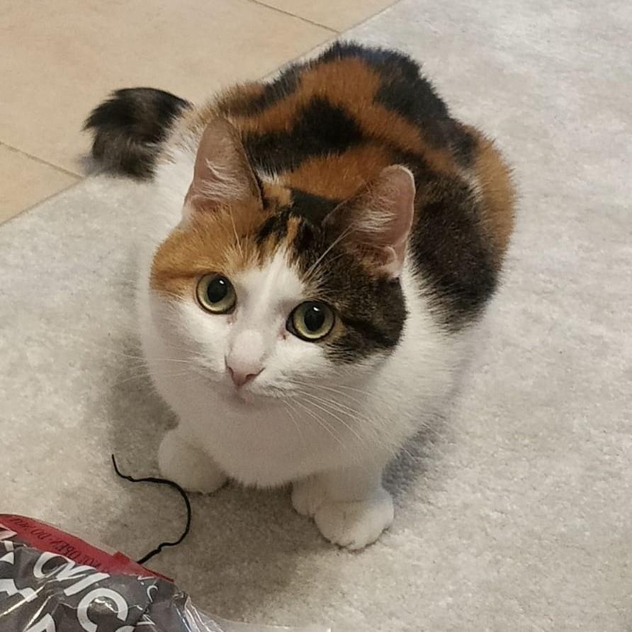 Kodittomat kissat kotia etsivät kissat Tassutiimi