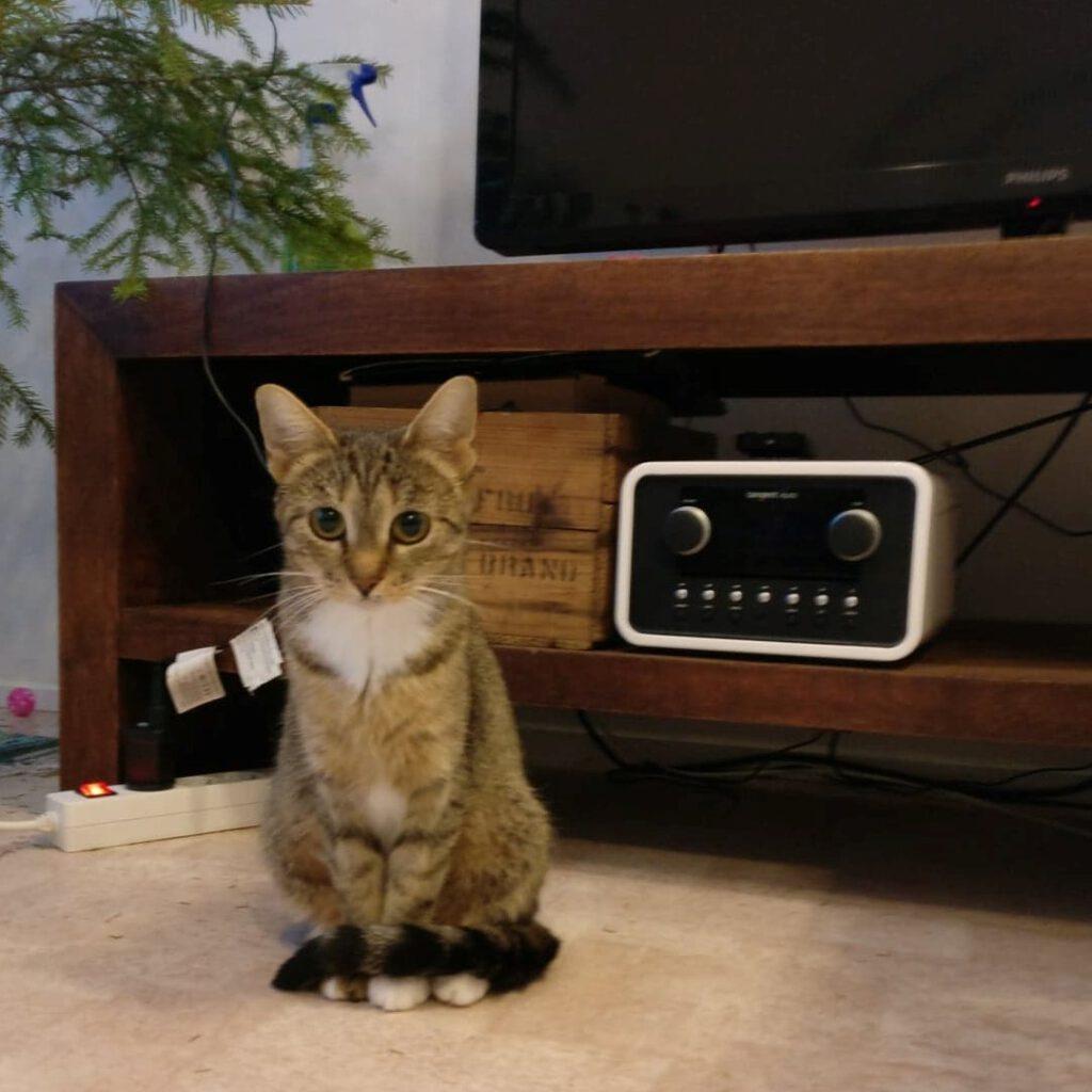löytökissa kotia etsivä kissa
