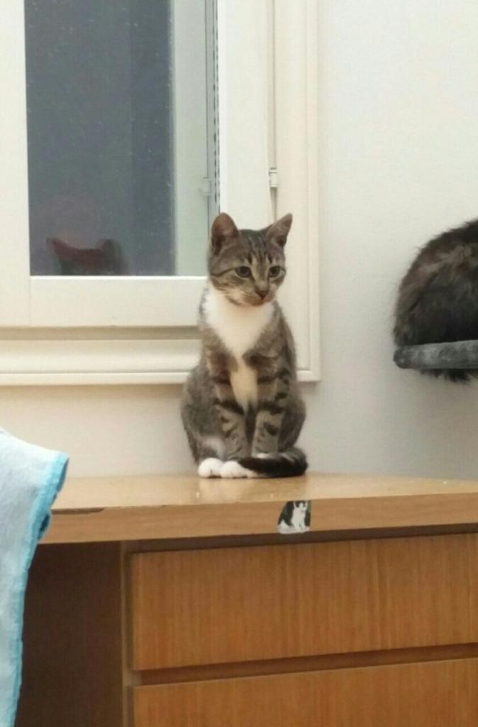 Tassutiimi koditon kissa