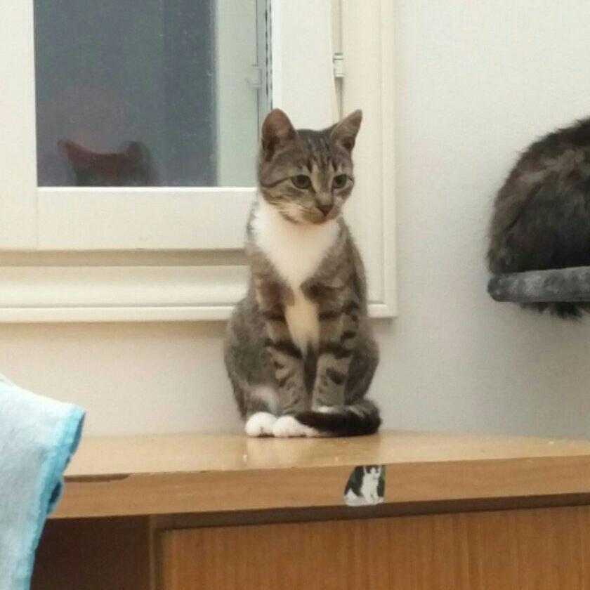 koditon kissa tassutiimi