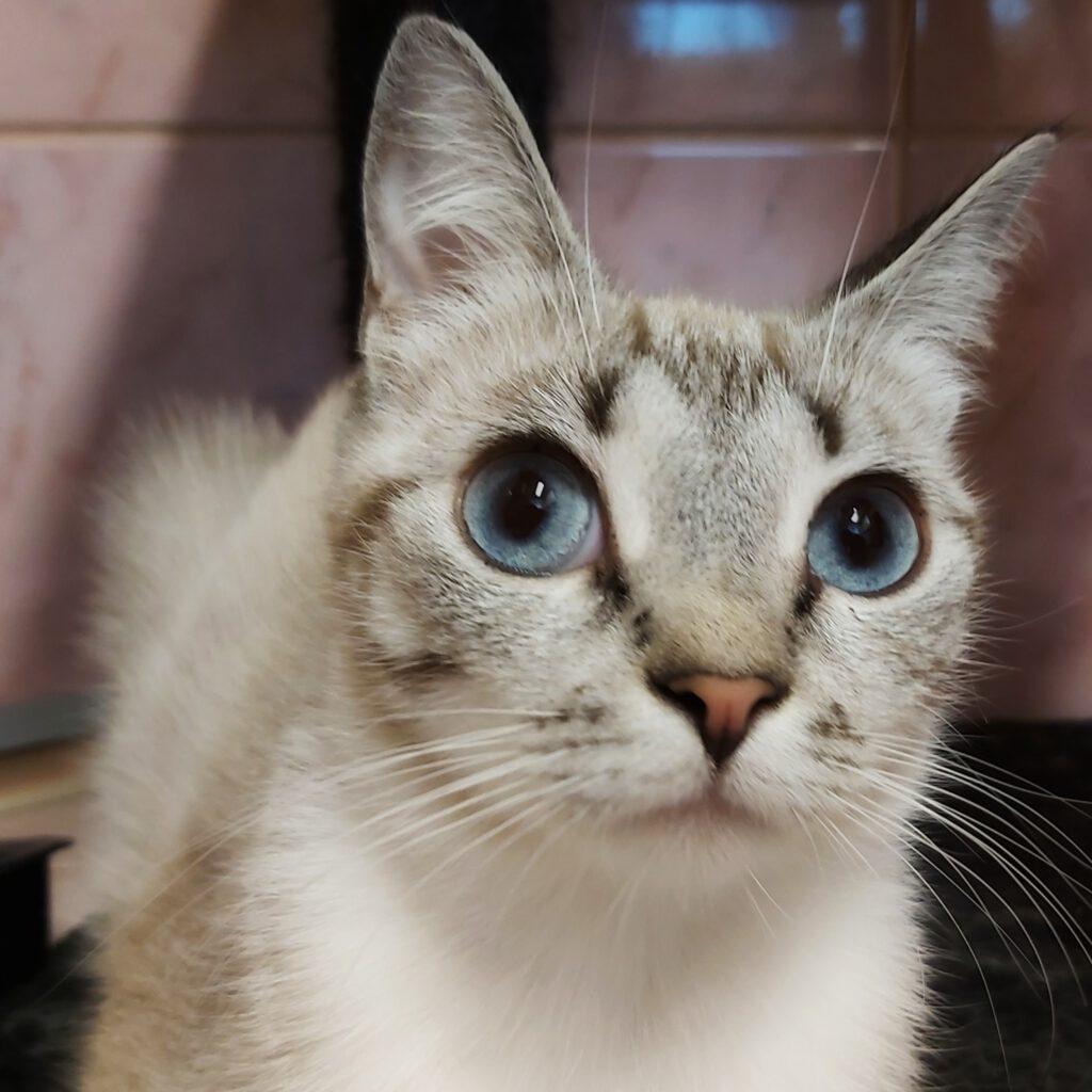 kotia etsivä kissa